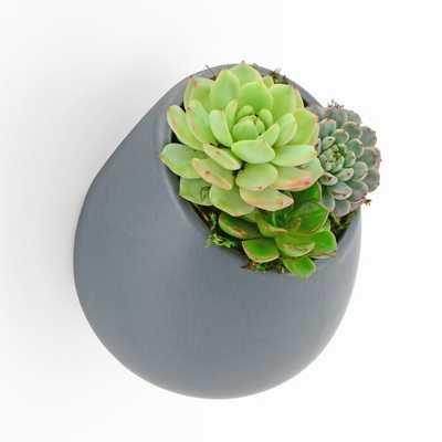 Achilles Ceramic Wall Planter - Wayfair
