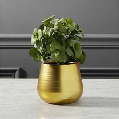 potted eucalyptus plant - CB2