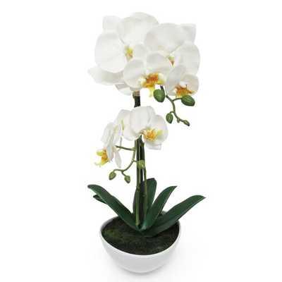 Phalaenopsis Orchid Flower Arrangements in Planter - Wayfair