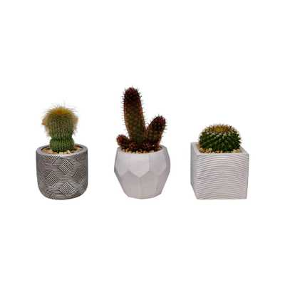 Pure Beauty Farms 3 in. Succulent in Ceramic (3-Plants) - Home Depot