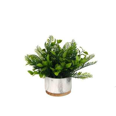 Fern Plant in Pot - Wayfair