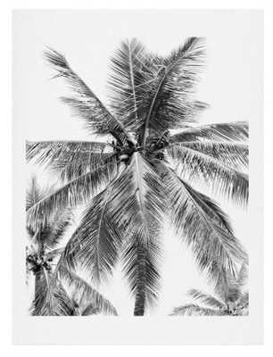 Island Palm Art Print - Wander Print Co.
