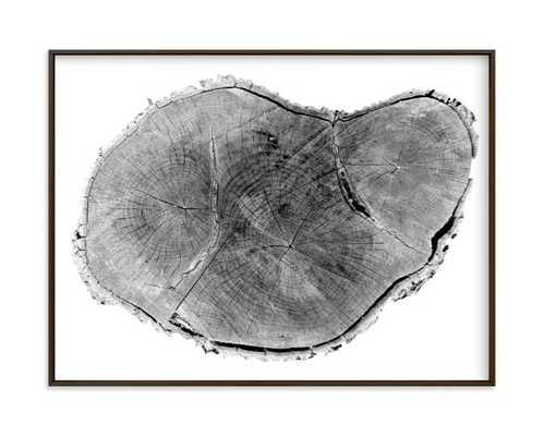 "Tree Rings pt. 1- 24""x18"" - Minted"