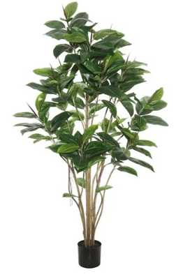 Rubber Foliage Tree in Pot - Wayfair