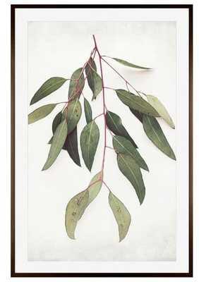 "Eucalyptus Sprig Paper Print By Lupen Grainne, 42 X 28"", Wood Gallery, Espresso, Mat - Pottery Barn"
