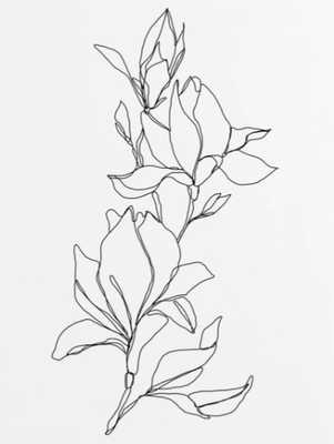 Botanical illustration line drawing - Magnolia Poster - Society6