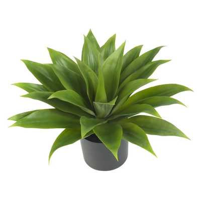 Agave Silk Plant - Fiddle + Bloom