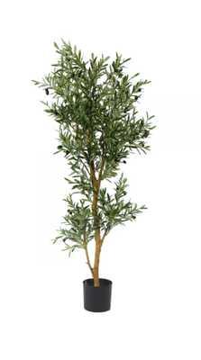 ITALIAN OLIVE TREE #1G90105PGN00 - Tisbury Vale