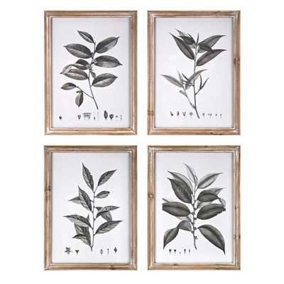 Aba Botanical Wall Decor - Ast 4 - Mercer Collection