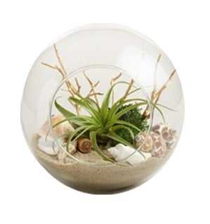 Beach Garden Live Plant Glass Terrarium by World Market - World Market/Cost Plus