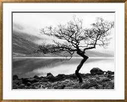 "Solitary Tree on the Shore of Loch Etive, Highlands, Scotland, UK - 49.5"" x 39.5"" - art.com"