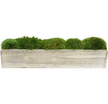 Moss Plant in Planter - Wayfair