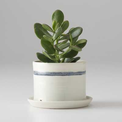 Banded Porcelain Planter -Large - Schoolhouse Electric