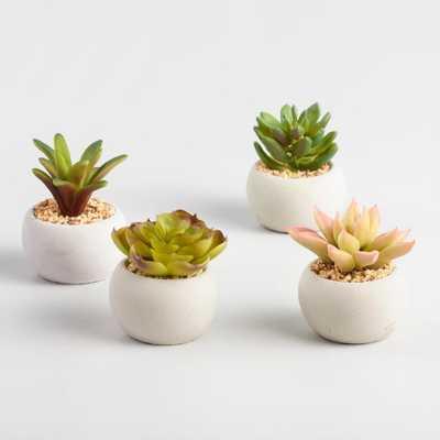 Mini Succulent Cement Pots Set of 4 by World Market - World Market/Cost Plus