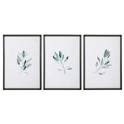 Framed Sage Prints, Set of 3 - Cove Goods