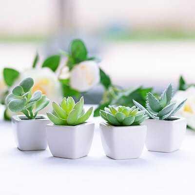 4 Piece Cactus Aloe Agave Succulent in Pot Set - Wayfair
