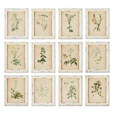 'Wild Flower Botanical' 12 Piece Picture Frame Print Set - Birch Lane