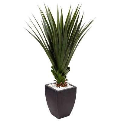 4.5' Spiked Agave in Black Planter (Indoor/Outdoor) - Fiddle + Bloom