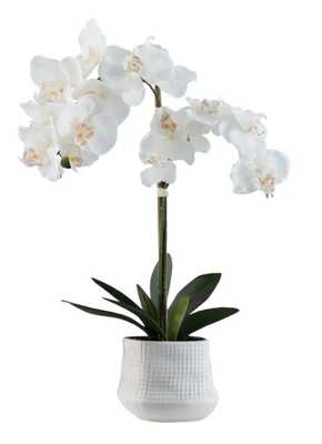 Orchid Floral Centerpiece in Pot - Wayfair