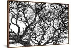 Tree Vine (Metal Wood Grain Frame) - art.com