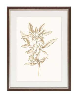 SEPIA BOTANICALS 3 Framed Art - McGee & Co.