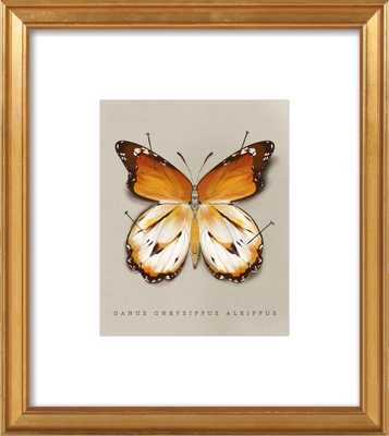 The Study of Butterflies No. 2 - Artfully Walls