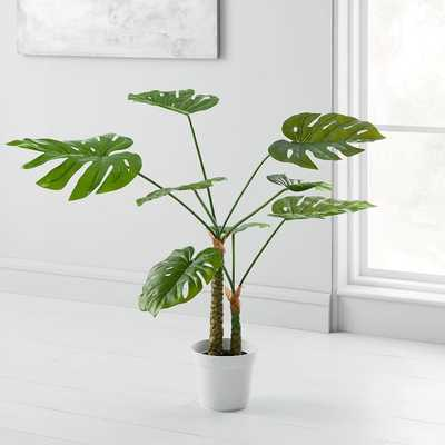 Faux Monstera Plant - West Elm