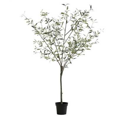 "Faux Potted Olive Tree, XL 86"" - Pottery Barn"