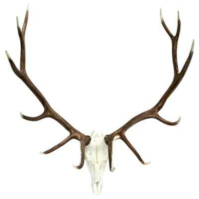 Elk European Wall Décor - Wayfair