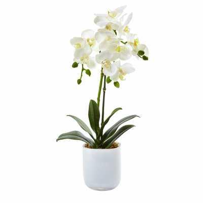 Phalaenopsis Orchids Floral Arrangements in Glass Vase - Wayfair