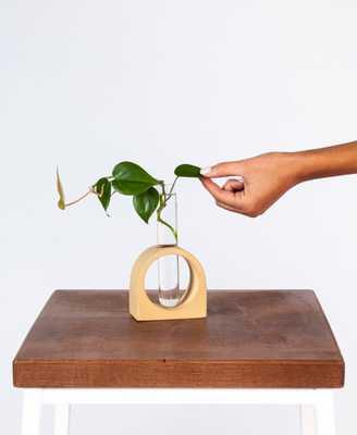 arch propagation kit - Bloomscape
