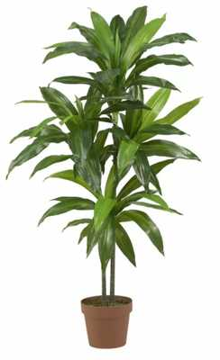 "42"" Dracaena Plant in Planter - Wayfair"