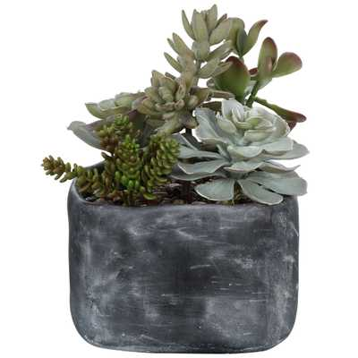 ALVERIO SUCCULENTS - Hudsonhill Foundry