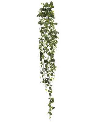 Fittonia Hanging Bush Ivy Plant - Wayfair