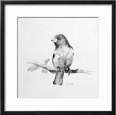 Bird Drawing IV By Lanie Loreth - art.com