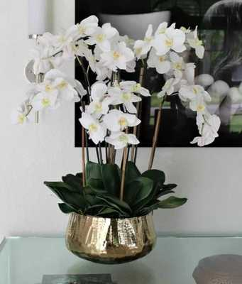 Phalaenopsis Orchids Floral Arrangement and Centerpiece in Planter - Wayfair