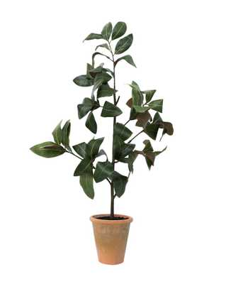 FAUX POTTED MAGNOLIA SAPLING - McGee & Co.