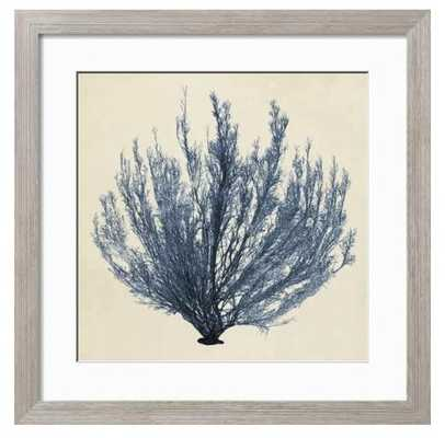 "Coastal Seaweed III with Farmhouse Gray 1.5"" Frame, Crisp - Bright White 2.5"" Mat, Acrylic: Clear Glass - art.com"