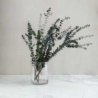 Dried Eucalyptus Bundle Stems - West Elm