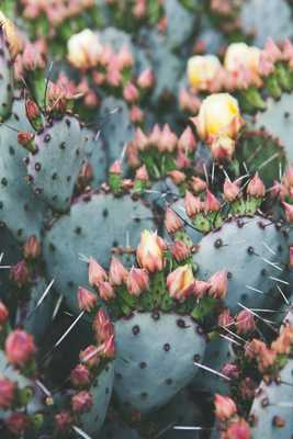 Prickly Pear BY CATHERINE MCDONALD - Artfully Walls