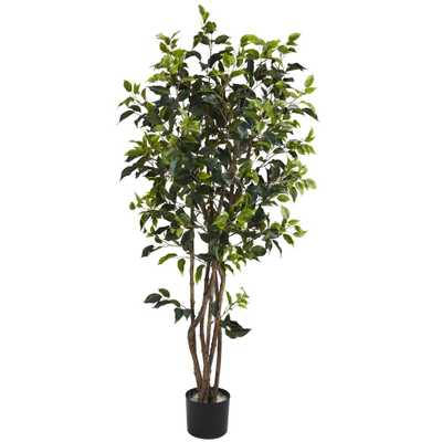 5' Ficus Bushy Silk Tree - Fiddle + Bloom