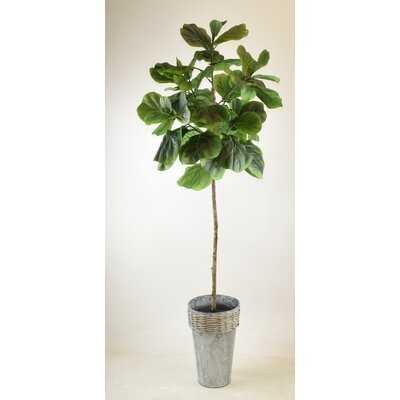 Fig Fiddle Leaf Fig Tree in Galvanized Pot - Wayfair