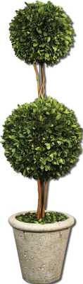 Two Sphere Topiary Preserved Boxwood - Hudsonhill Foundry