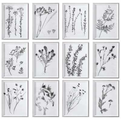 CONTEMPORARY BOTANICALS FRAMED PRINTS, S/12 - Hudsonhill Foundry