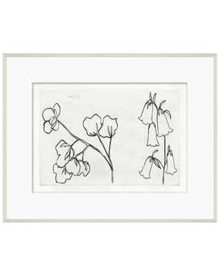 COTTON SKETCH Framed Art - McGee & Co.