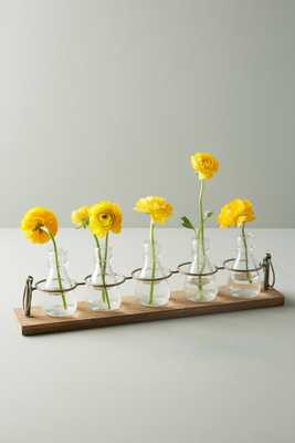 Apothecary Bud Vases, Set of 5 - Anthropologie