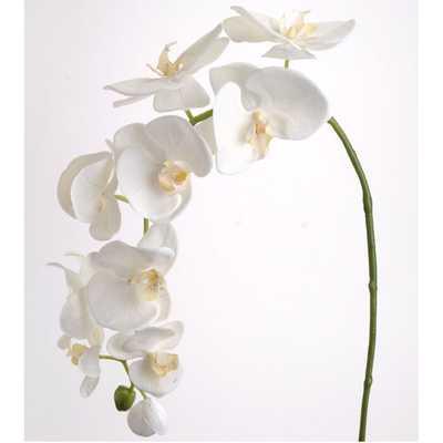 Phalaenopsis Orchid SprayPhalaenopsis Orchid Spray - Wayfair