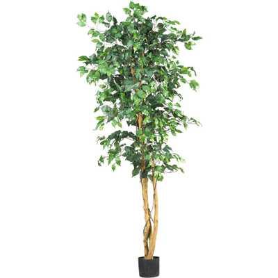 6' Ficus Silk Tree - Fiddle + Bloom