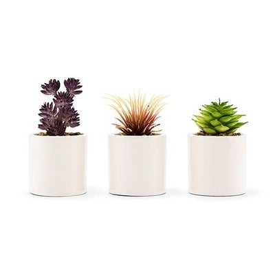Small Faux Desktop Succulent Plant in Pot (set of 6) - Wayfair