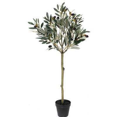 Leaf Topiary Olive Tree in Pot - Wayfair